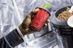 Bobby holds a small marijuana plant that is growing inside a red plastic cup. Eventually, Bobby will transfer the plant to a larger pot. SHFWire Photo by Matias J. Ocner